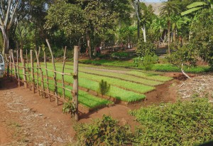 Baumpflanzungsprojekt1