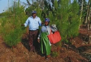 Baumpflanzungsprojekt3
